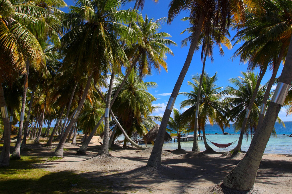 Posons le décor à travers une photo : cocotiers et lagon, vous êtes bien arrivés aux Tuamotu.