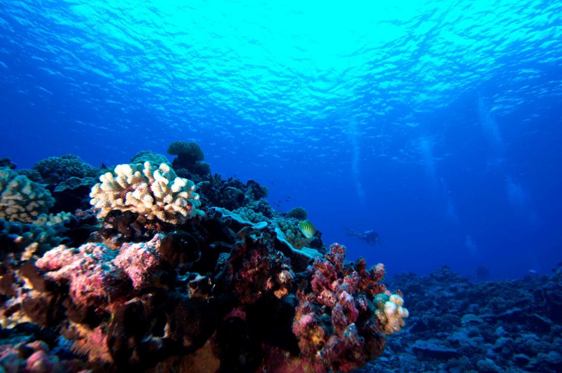 Dans le grand bleu de Manihi ; le secteur où s'effectuent les plongées est aujourd'hui une zone marine protégée.