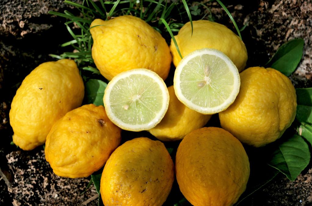 Carnet de voyage - Fruits colorés de Rurutu