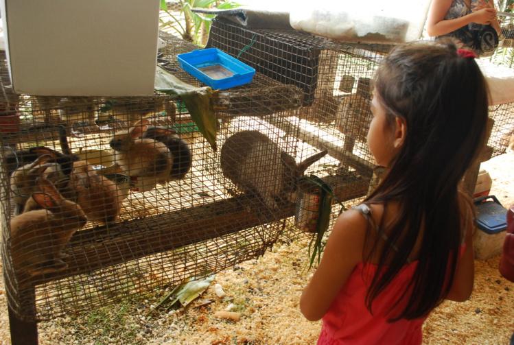 Les enfants passent de longs moments à observer les animaux.