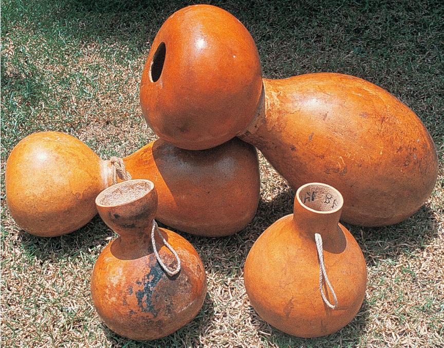 Lagenaria siceraria. La calebasse (hue) aux multiples usages et, elle aussi, une plante d'origine américaine. Là encore, sont-ce les Polynésiens qui sont allés la chercher, ou est-ce une expédition « indienne » qui l'a amenée chez nous ?