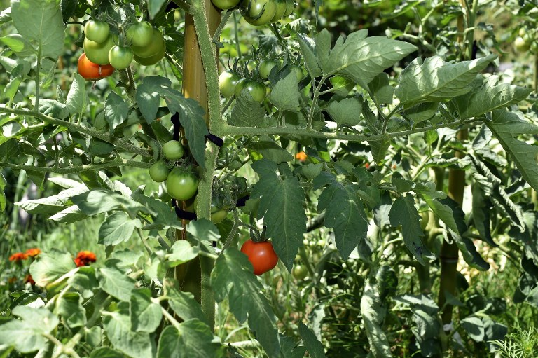 Venez échanger des graines samedi pour alimenter votre jardin et pouvoir manger local dans quelques mois.
