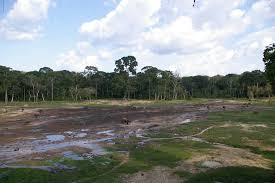 Dans la forêt tropicale de Porto Rico, les insectes apparemment décimés
