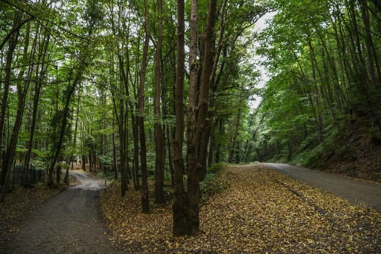 Khashoggi : recherches dans une forêt, une crise majeure se profile entre Ryad et ses alliés