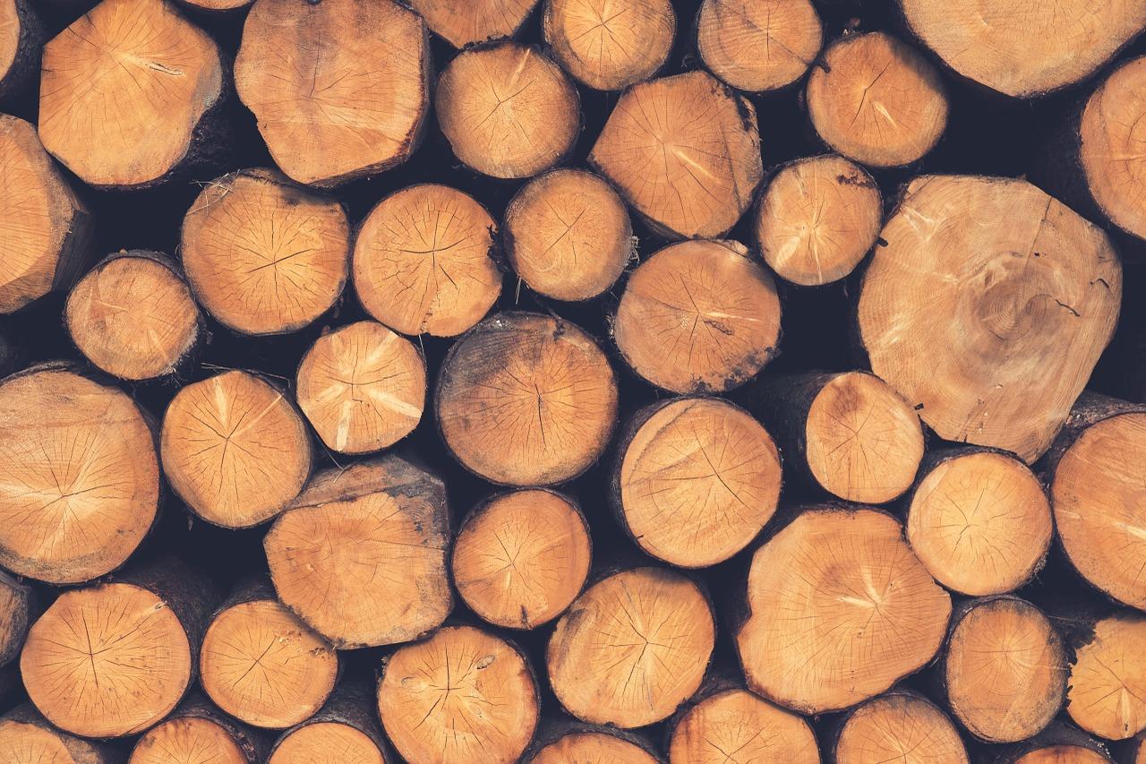Du cuir aux carburants, l'impact de nos consommations sur la déforestation