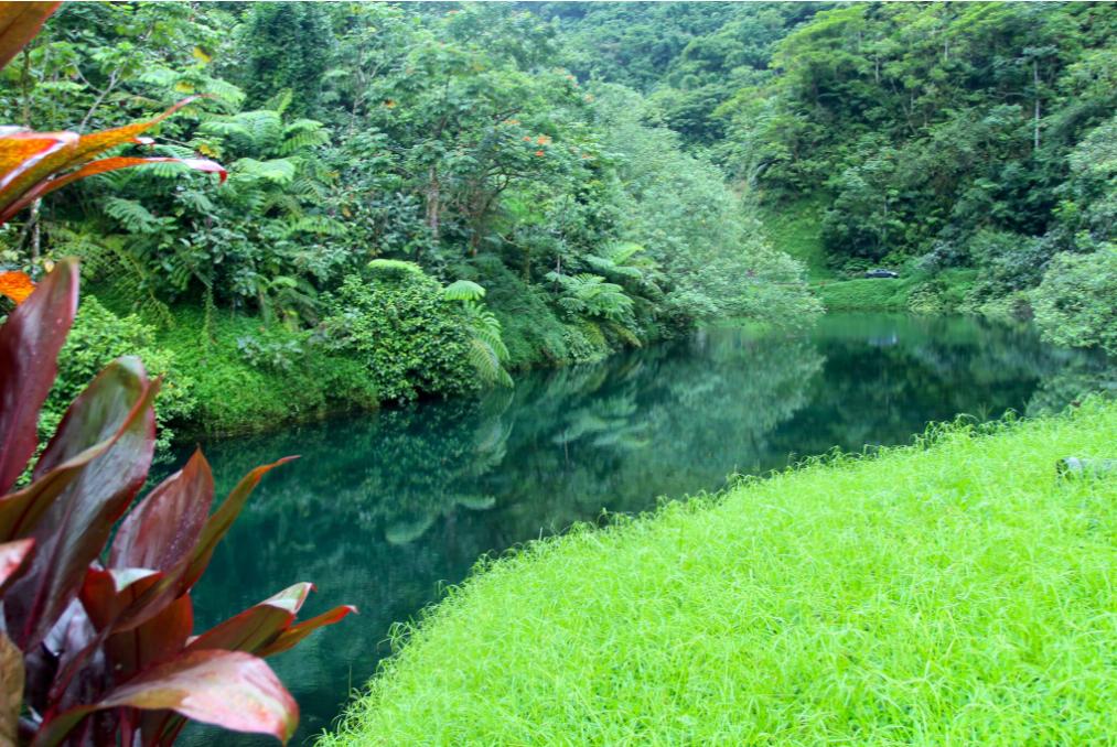 La flore de la vallée est d'une extrême densité et les pentes, le plus souvent ombragées, sont des jungles impénétrables.