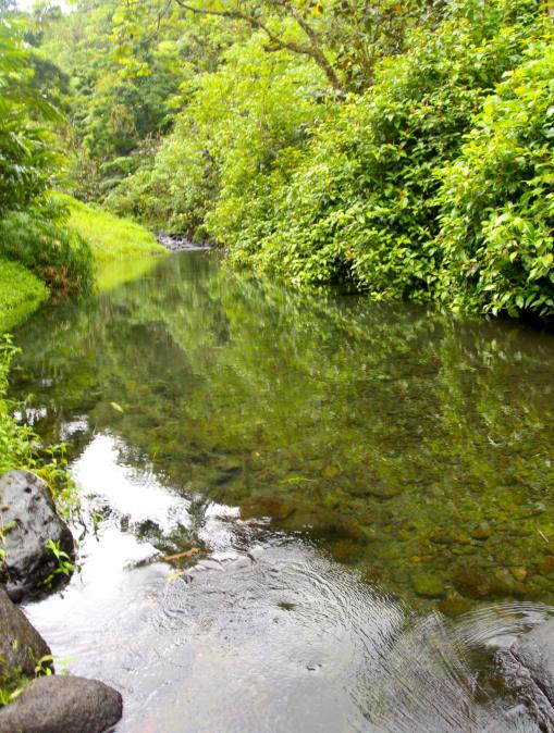 La bonne santé de la rivière est évidente lorsqu'on prend le temps d'observer sa faune, sa flore et ses eaux cristallines.