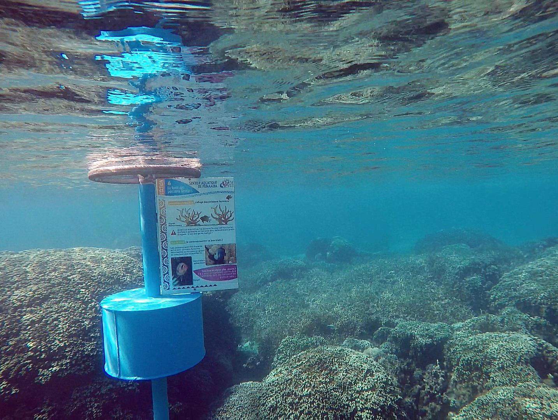 Neuf étapes composent le sentier aquatique de Vaiava est très facile d'accès. Crédit Fanny Seguin.