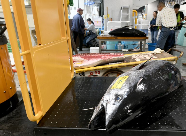 L'avenir du thon obèse, au cœur des préoccupations du monde de la pêche