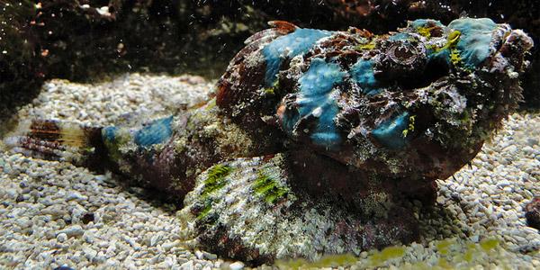 Piqué par un poisson pierre, un enfant de 10 ans décède à Bora Bora