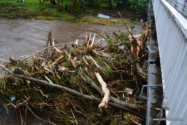 En ces temps de pluies, évitez de trainer les arbres découpés aux abords des lits de rivières.
