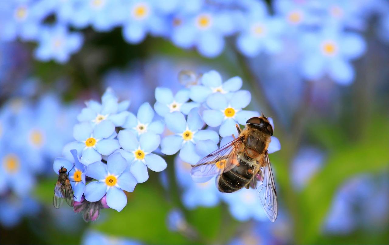 """Un vaccin pour les abeilles face à """"l'apocalypse des insectes"""""""