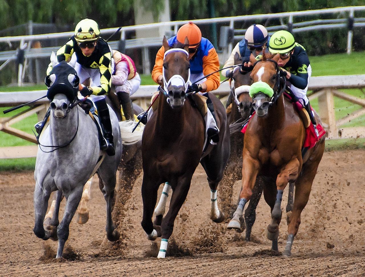30 Millions d'amis interpelle le monde des courses après une vidéo sur un abattoir de chevaux