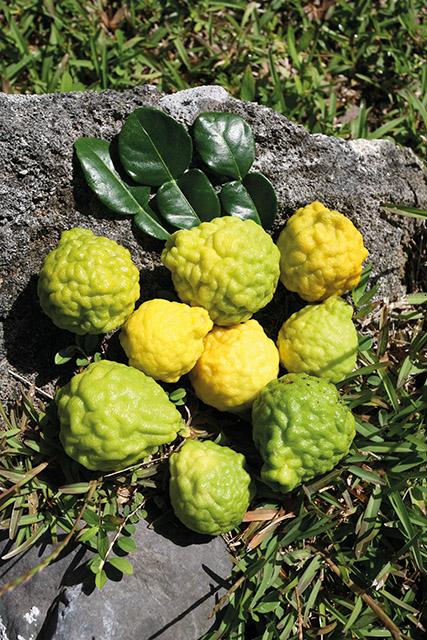 Carnet de voyage - Ces nouveaux fruits de Tahiti