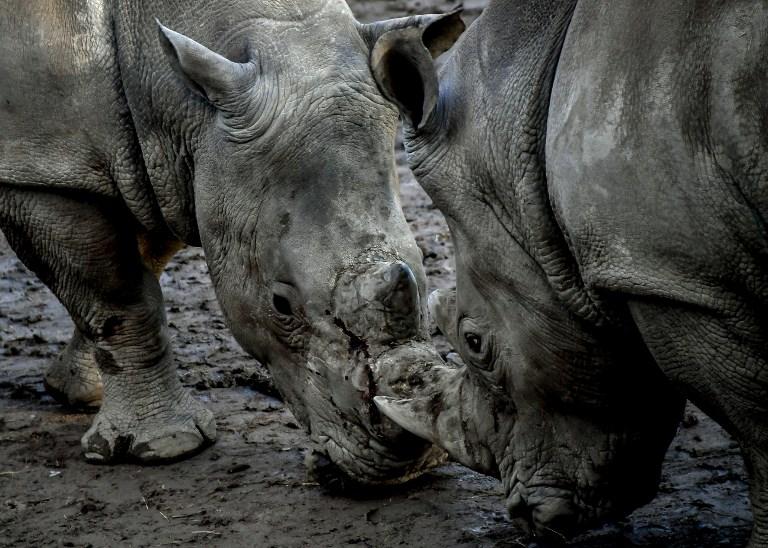 Plus de 200 animaux empaillés issus d'espèces protégées saisis en Espagne