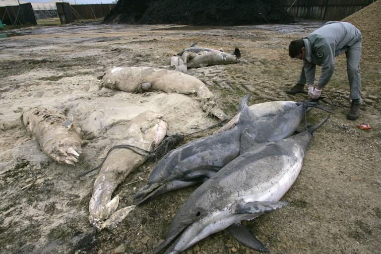 Déjà plus de 400 dauphins échoués sur la côte atlantique en 2019