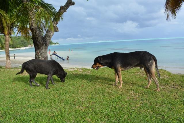 La diminution importante du nombre de chiens est un enjeu aussi pour le développement du tourisme