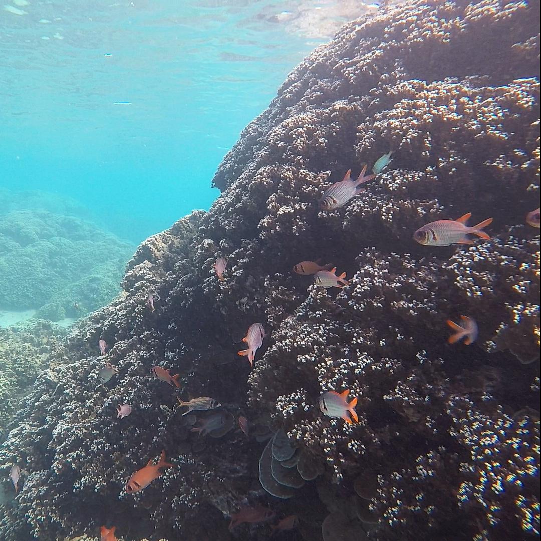 Il sera bientôt interdit de nager le corps enduit de crème solaire, non respectueuse de l'environnement, le long des sentiers de randonnées aquatiques. Ici sur la plage de Vaiava. Crédit Fanny Seguin.