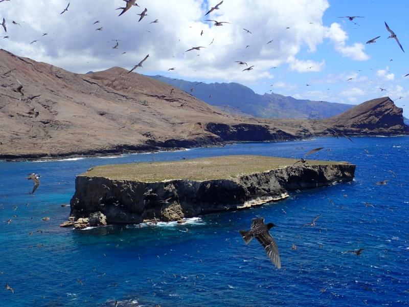 L'îlot de Teuaua est particulièrement difficile d'accès : un paradis pour les oiseaux de mer, qui est désormais débarrassé de sa principale menace, le rat noir.