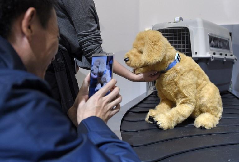 Après les humains, l'industrie du mobile connecte les animaux