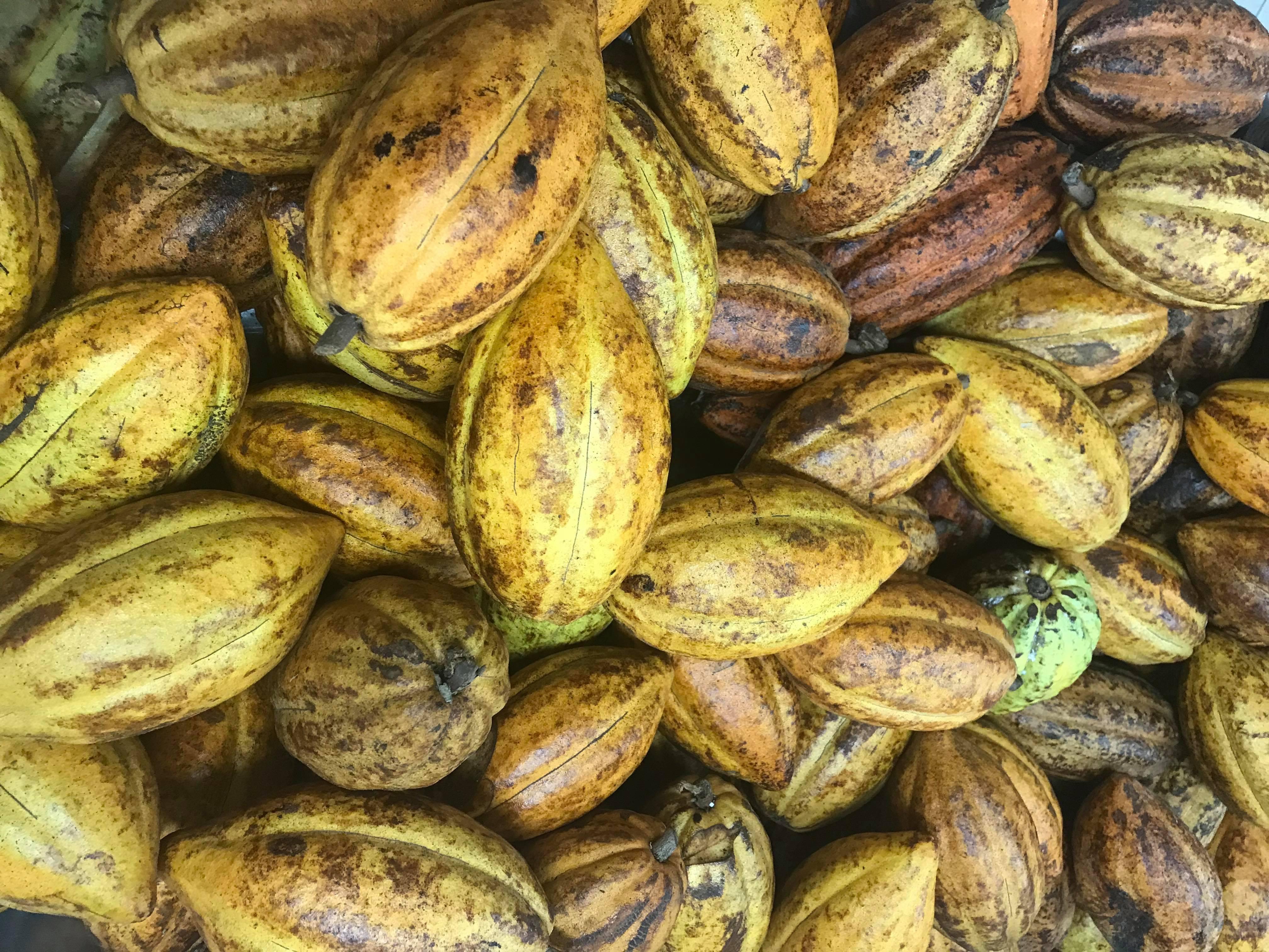Pour ses 10 ans, Couleur cacao lance une tablette 100% locale (et ouvre ses portes)