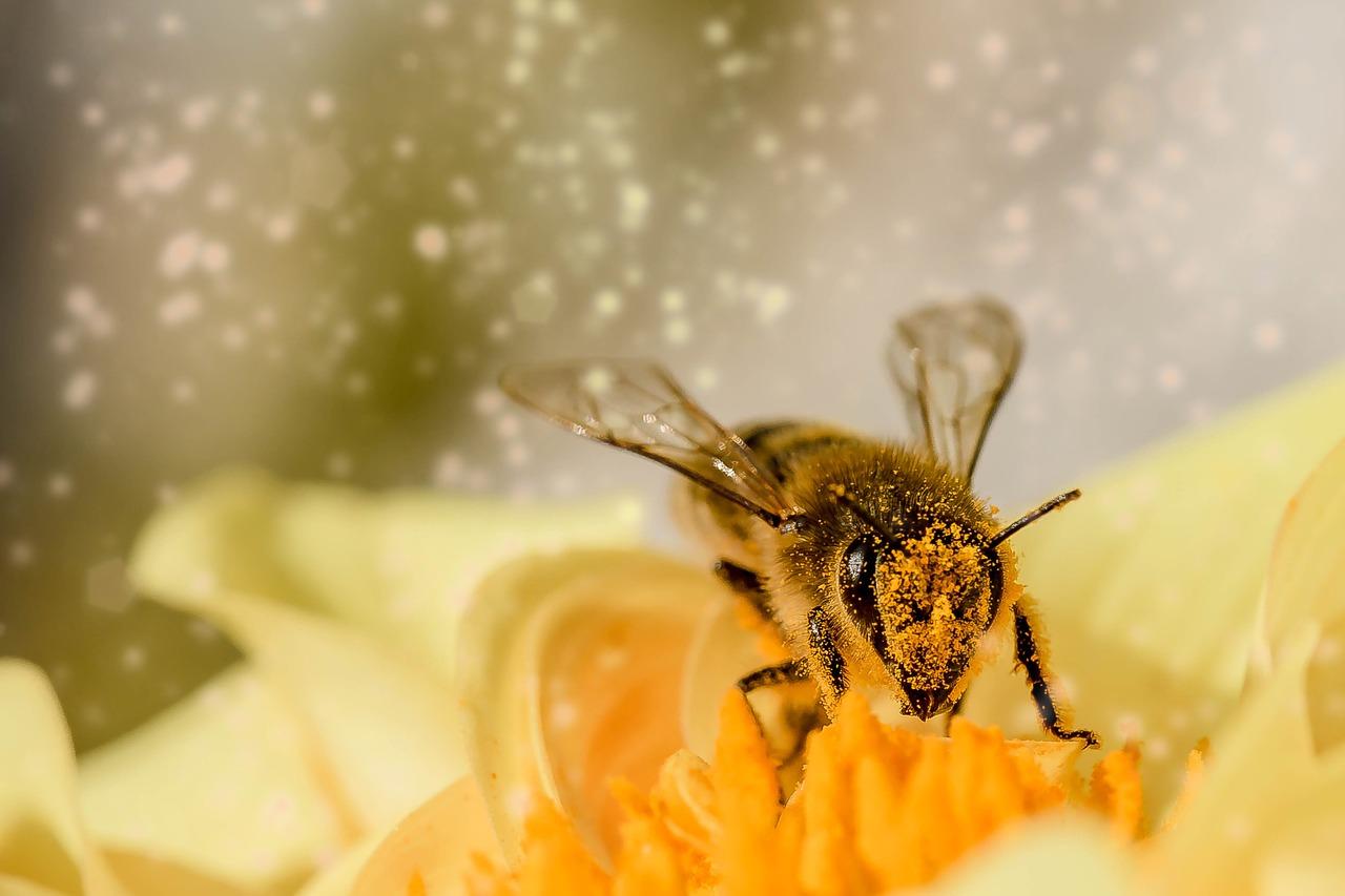 Davantage de pollens avec le réchauffement climatique et potentiellement plus d'allergies