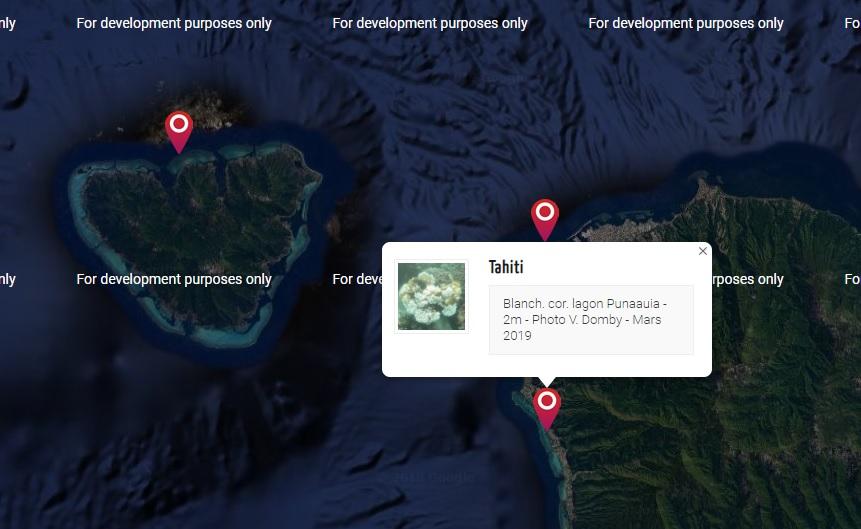 """Le projet de science participative """"Un Œil sur le Corail"""" permet de suivre l'état des récifs à travers toute la Polynésie."""