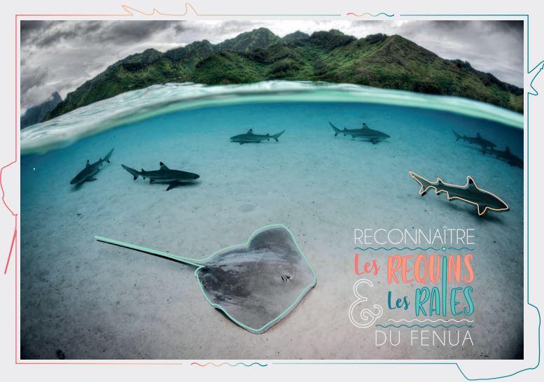 Page enfant : Apprendre à reconnaître les raies et requins