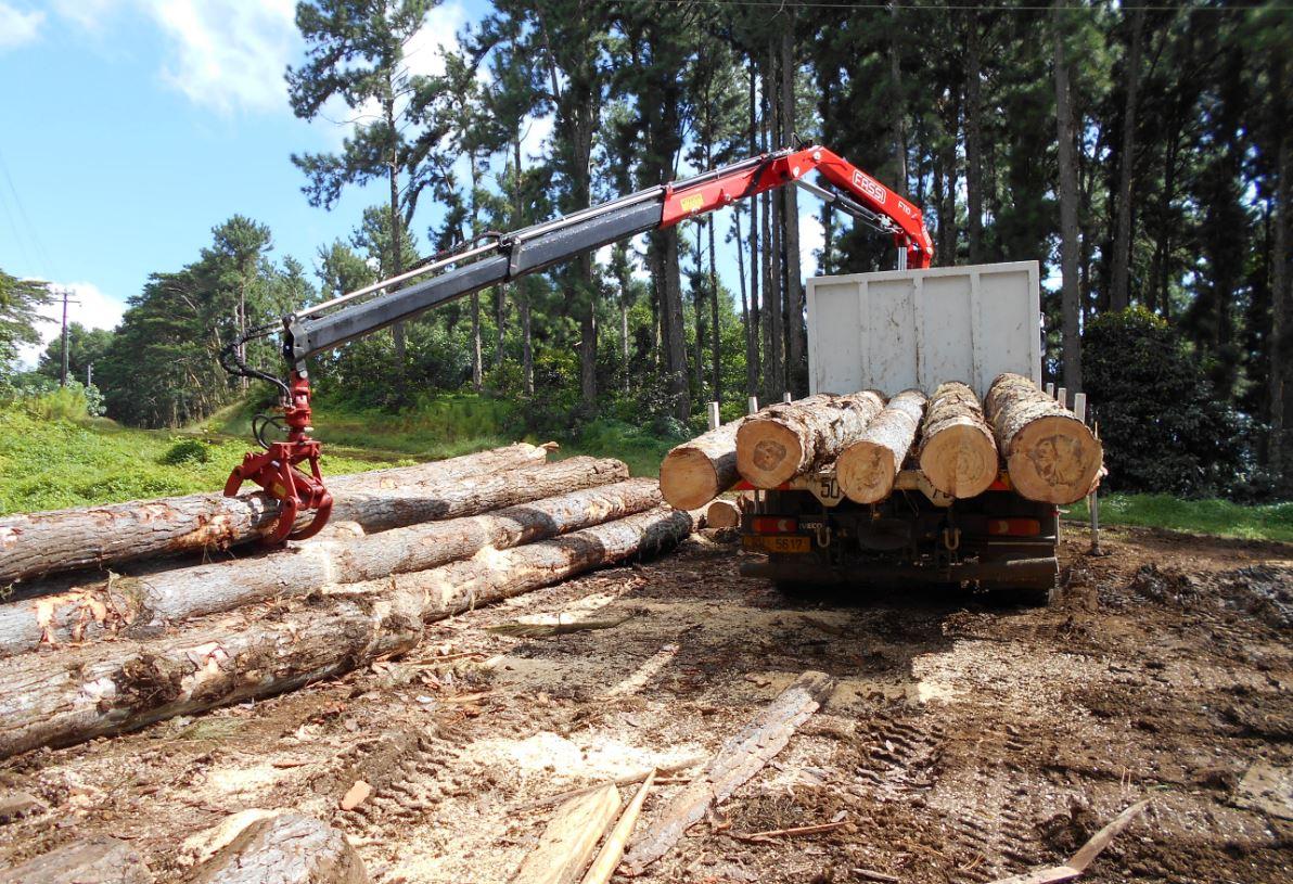 Une filière bois dans les starting-blocks en Polynésie