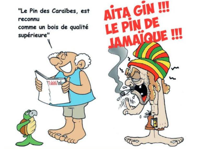 """"""" Le Pin des Caraïbes """" vu par Munoz"""