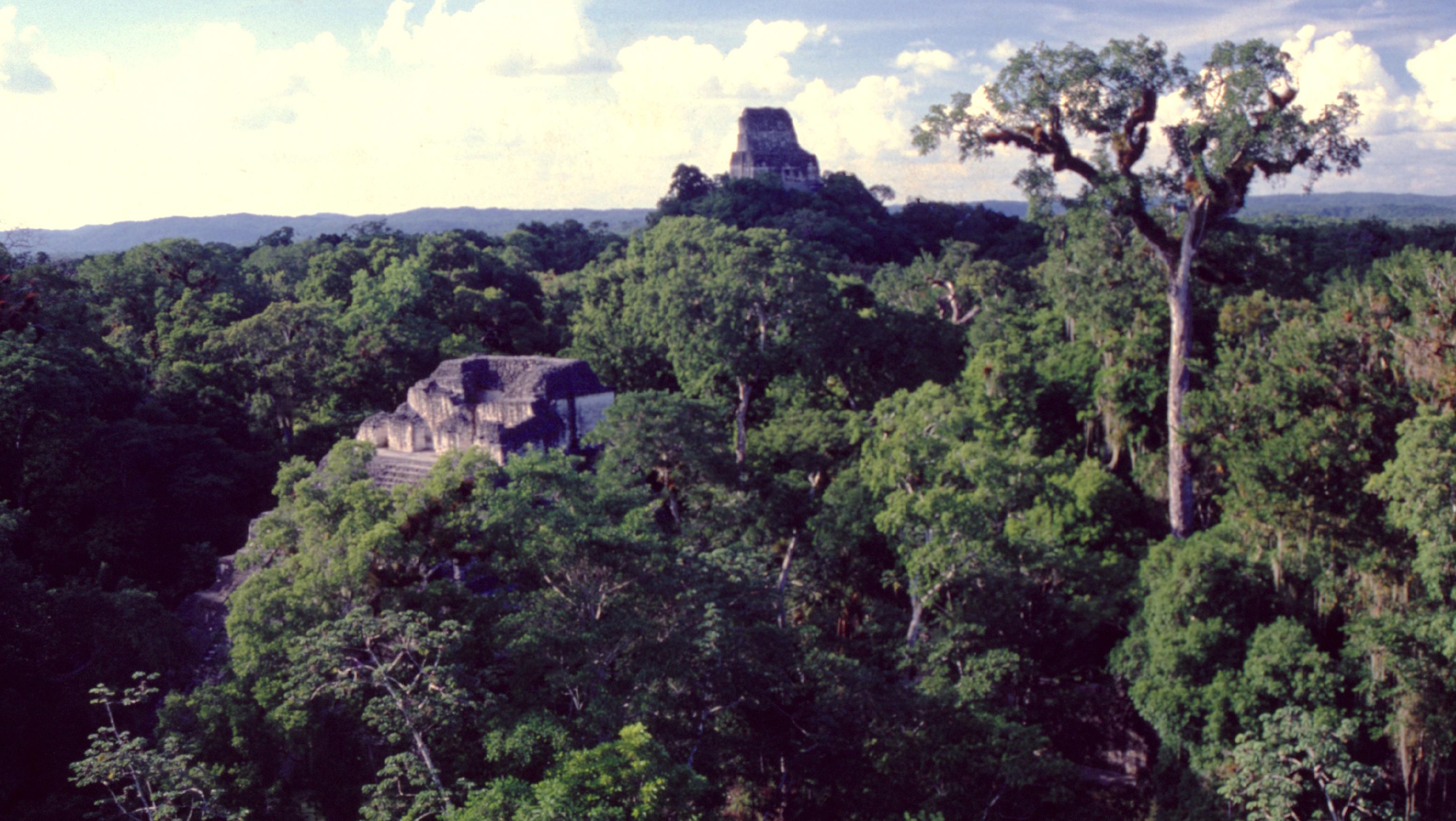 Dans une mer verte, apparaissent quelques vaisseaux de pierre, qui, comme des icebergs, ne dévoilent qu'une petite partie de leur structure... En mille ans, la jungle a littéralement englouti la capitale des Mayas.