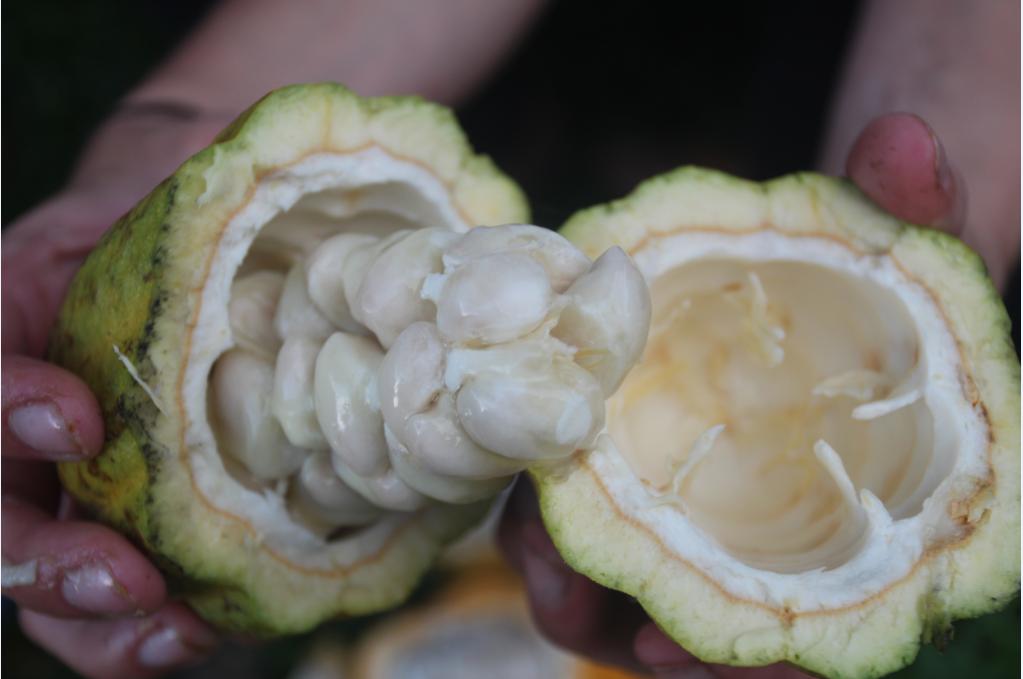 A l'intérieur de la calebasse sont rangées des fèves dans un mucilage blanc sucré.