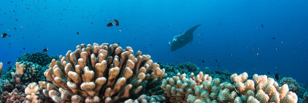 La Polynésie française à l'honneur à l'Aquarium de Paris
