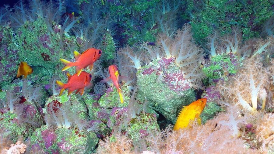 La fosse des îles Mariannes, zone la plus profonde de la planète, a été hautement protégée par une réserve marine en 2009 (crédit Pew)