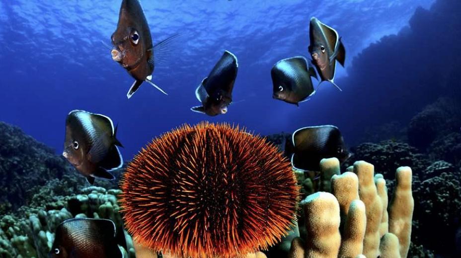 « On se sent moins seul pour protéger notre océan »