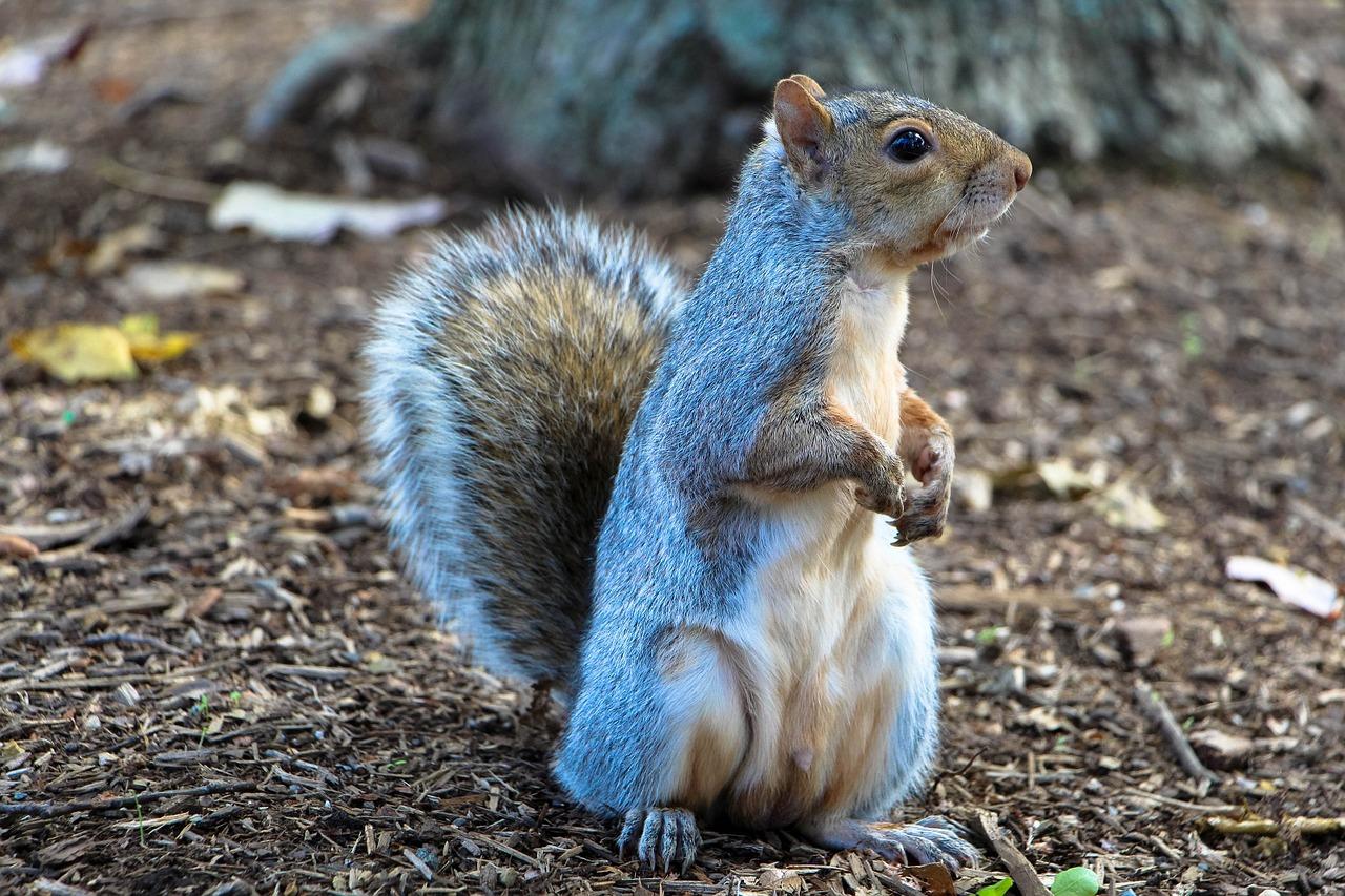 USA: il donnait de la meth à son écureuil pour en faire un animal d'attaque