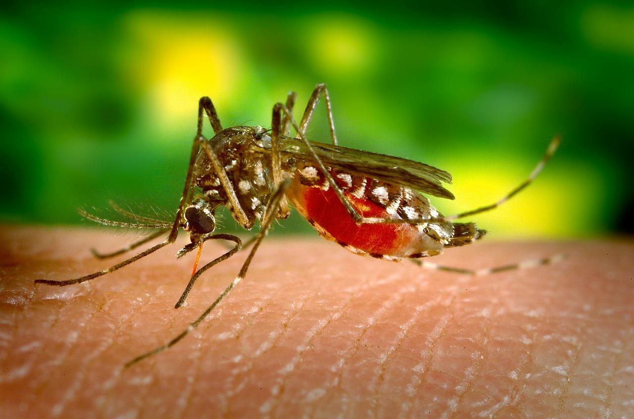 Démoustication en Dordogne après un cas de dengue