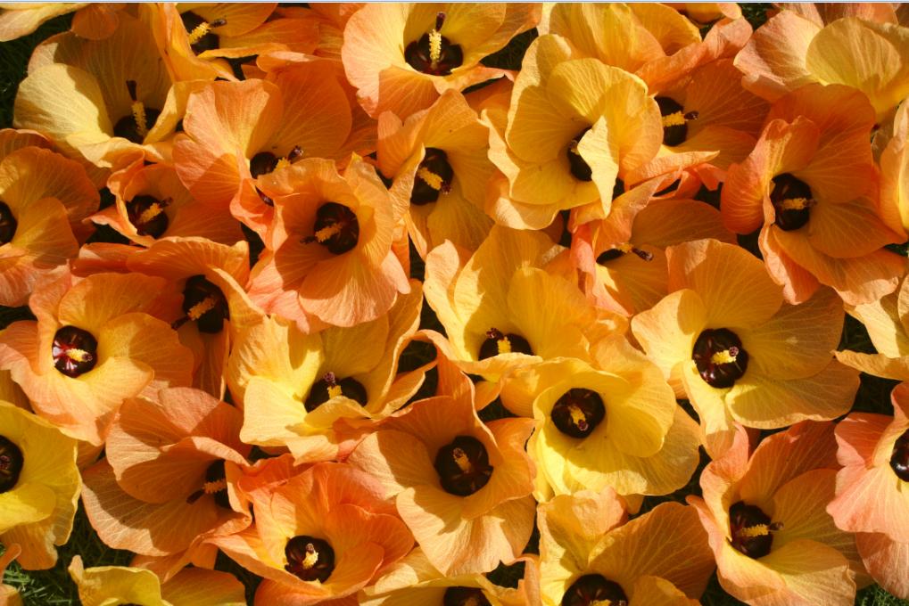 Carnet de voyage - Raivavae, l'île aux hibiscus XXL