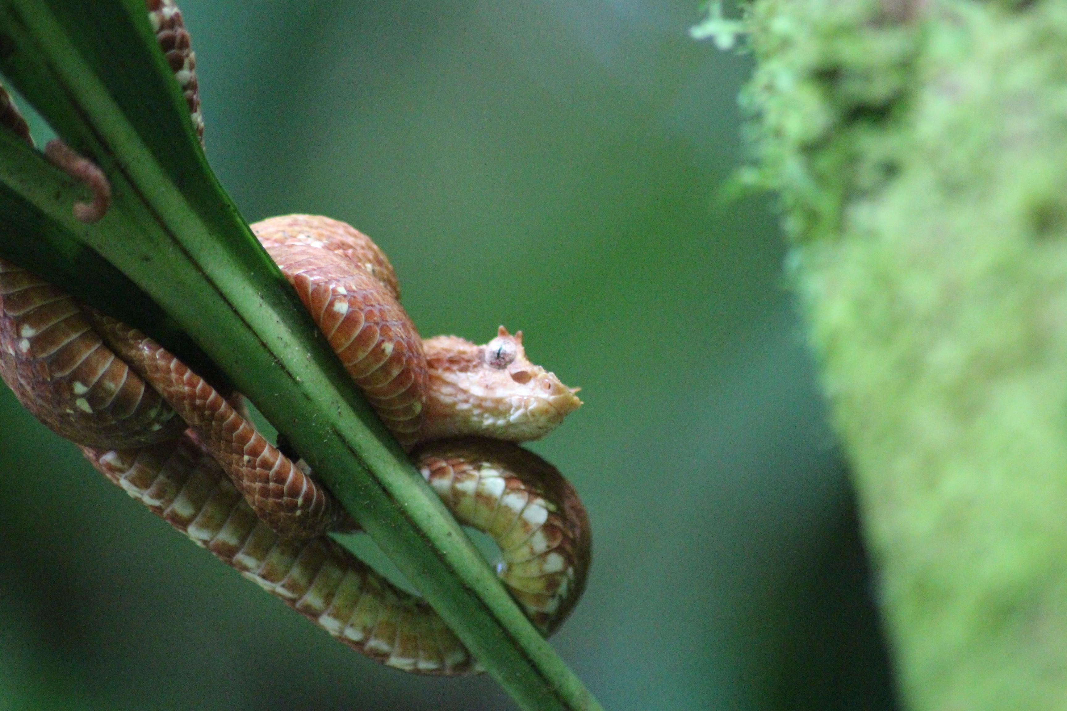 Certaines personnes ont tellement peur des serpents qu'on parle de phobie. C'est l'ophiophobie.