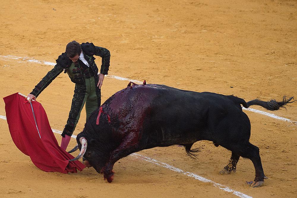 Bergé (LREM) souhaite l'interdiction des corridas aux mineurs