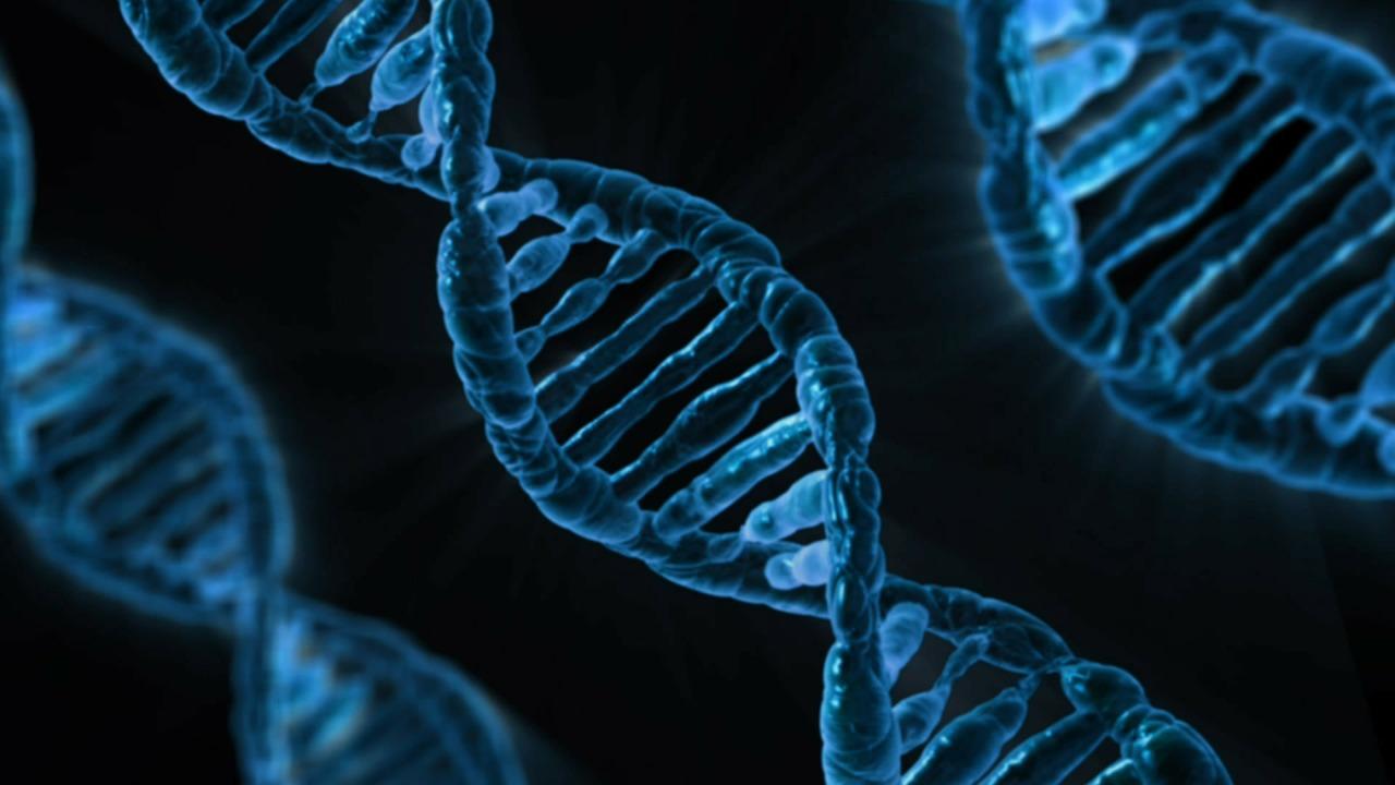 La plus grande étude d'ADN éclaircit l'origine des langues indo-européennes