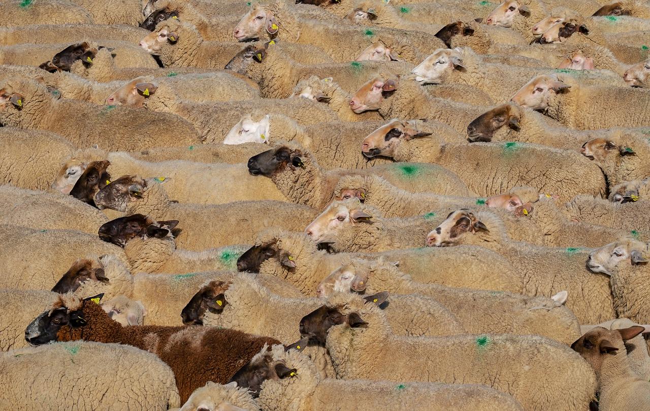 """Le moral des éleveurs """"au plus bas"""" après un été de sécheresse"""