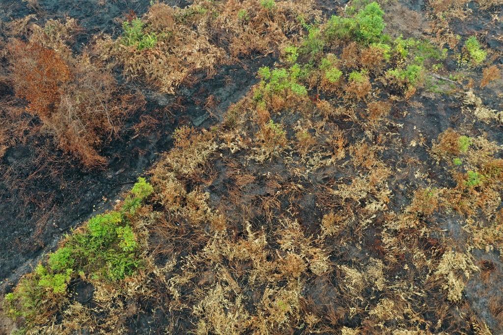 Des forêts tropicales vitales contre le réchauffement en flammes