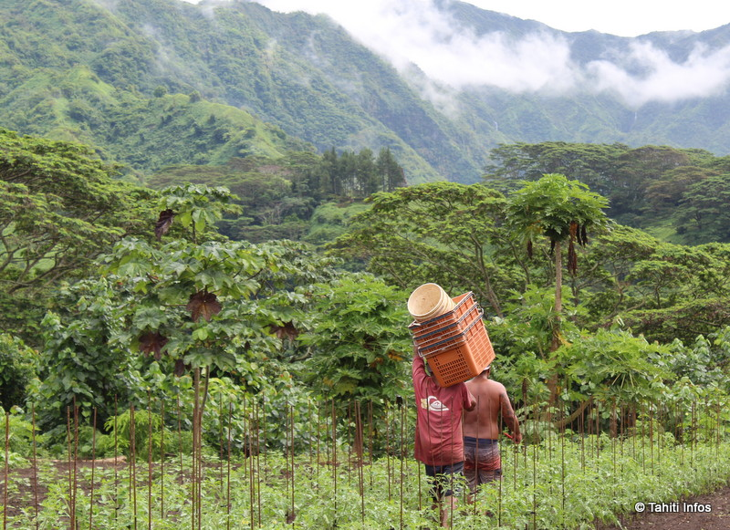 Les producteurs locaux, plus professionnels, arrivent à proposer des produits beaucoup plus sains que les importations selon les analyses de la direction de l'Agriculture. (Crédit photo : Chambre de l'agriculture)