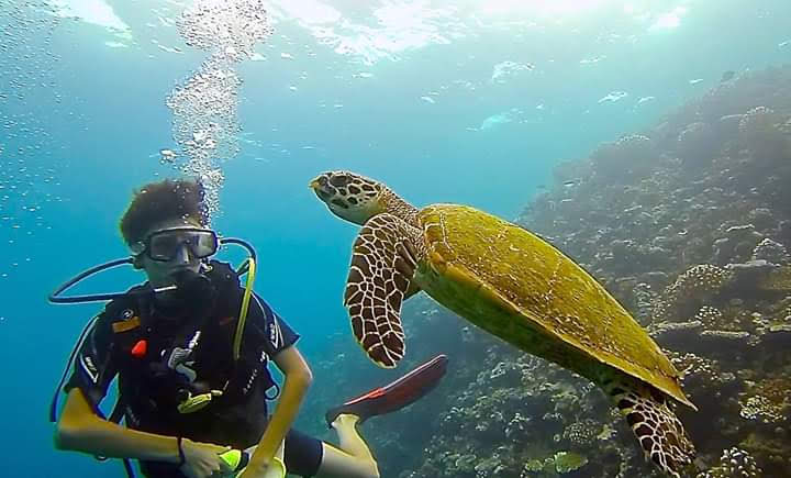 Des plongées de découverte du biomimétisme sont organisées. Les tortues par exemple ont la capacité incroyable de se déplacer avec puissance et précision dans l'eau, et même de faire marche arrière, ce qui a inspiré des créateurs de drones sous-marins.