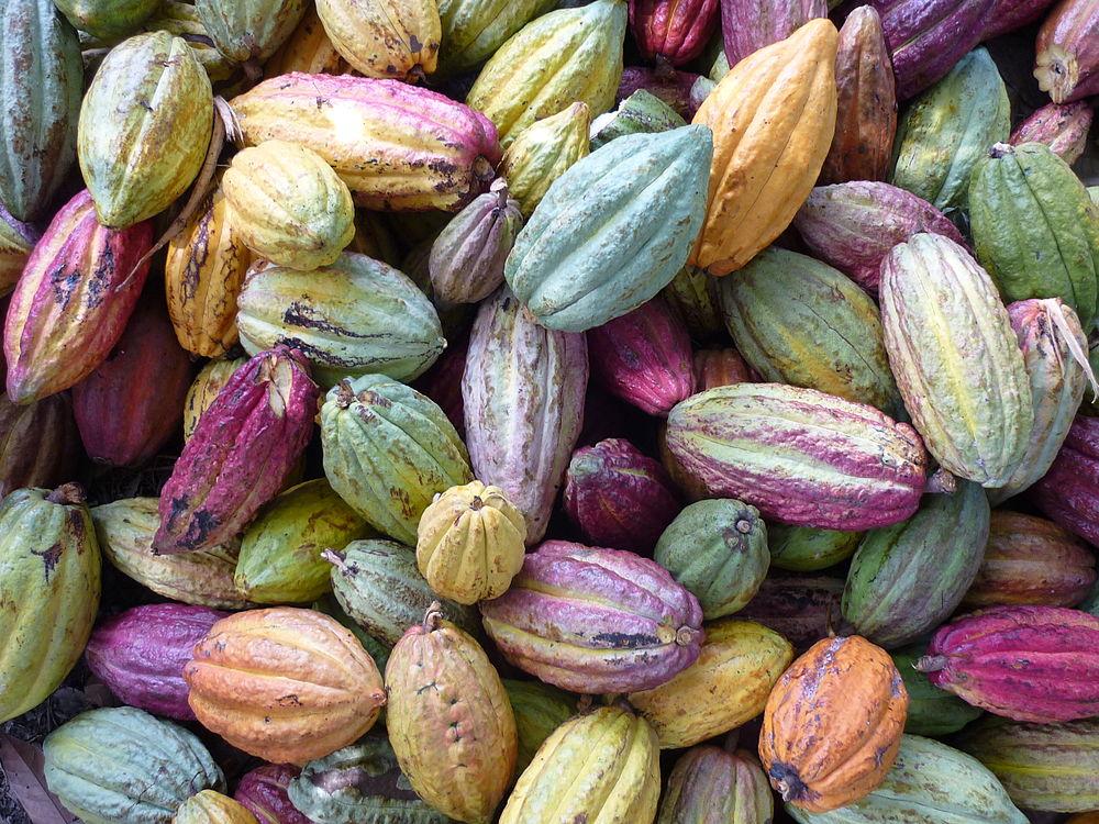 Page enfant : De la fève au chocolat