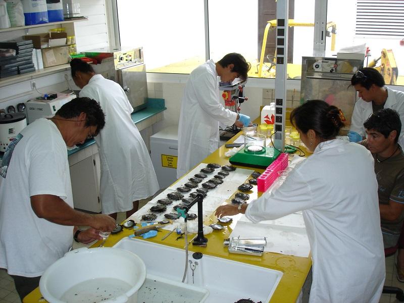 Des techniciens du laboratoire Recherche marine en Polynésie qui travaillent sur la qualité de l'huître perlière (Toutes les photos sont fournies par l'Ifremer)