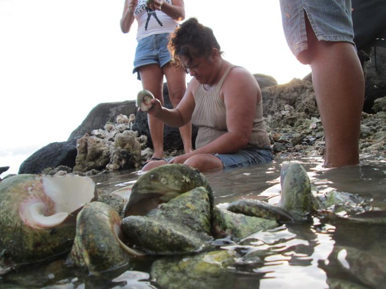 La pêche aux trocas ouverte dès lundi à Raiatea et Tahaa