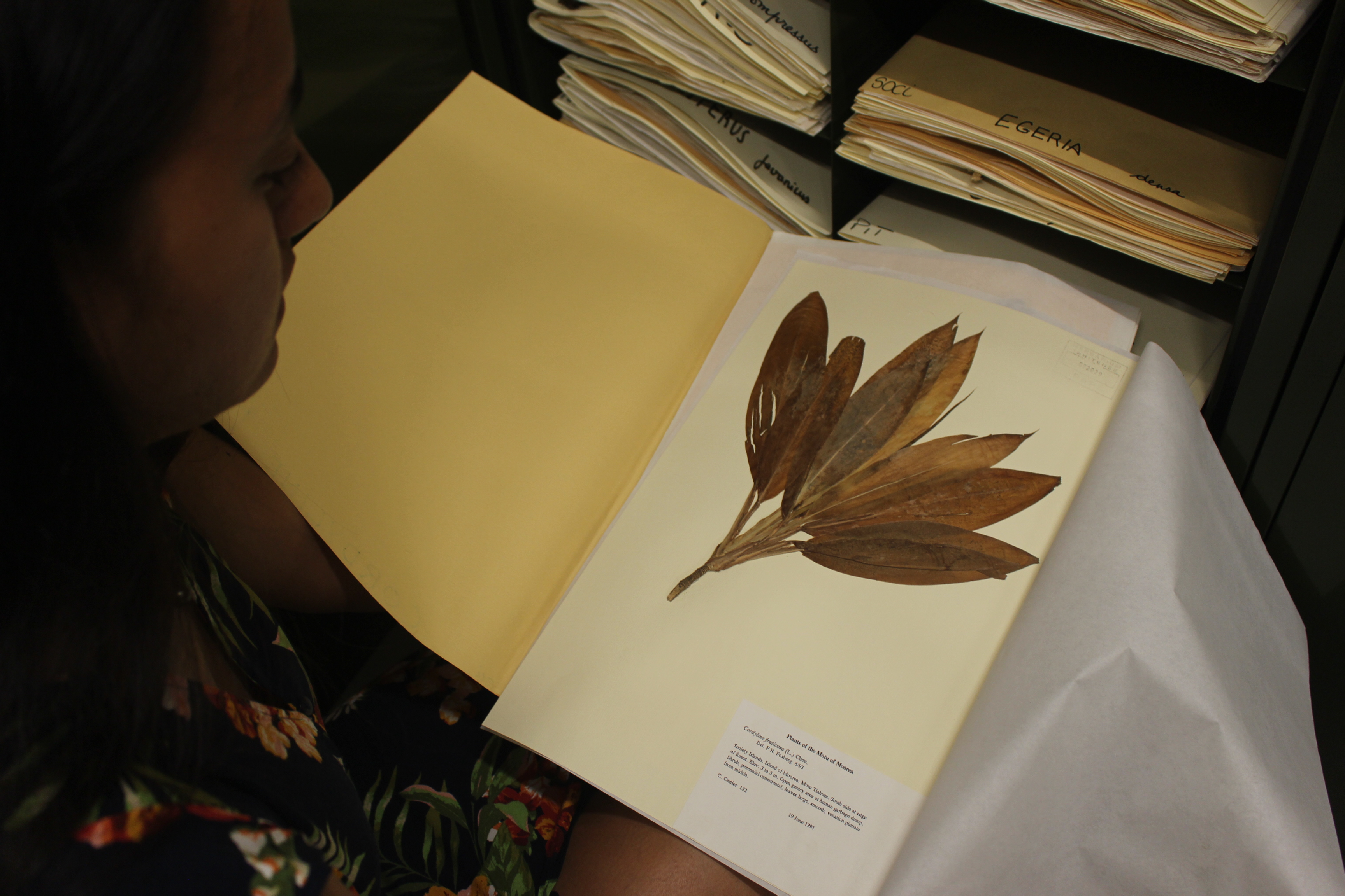 Herbier de Polynésie, un trésor insoupçonné
