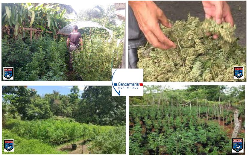 Importante saisie de cannabis à la Presqu'île